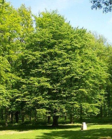 lasttree2.jpg